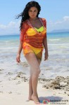 Veena Malik In A Hot Swim Suit